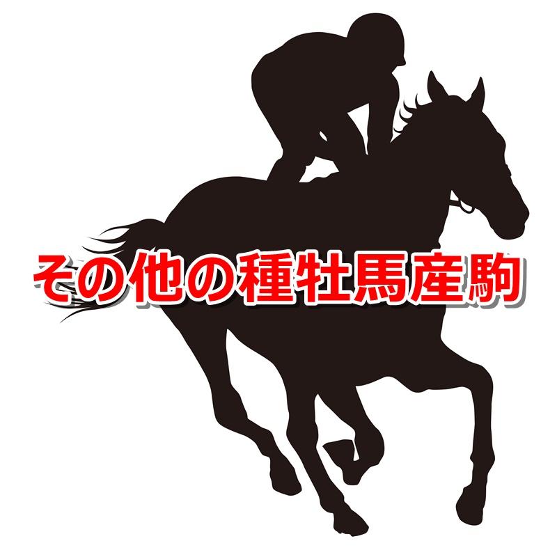 その他の種牡馬産駒カタログキャッチ